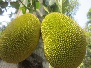jack-fruit-crazy-looking-exotic-fruits